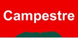 Óleo de Amendoim | Campestre